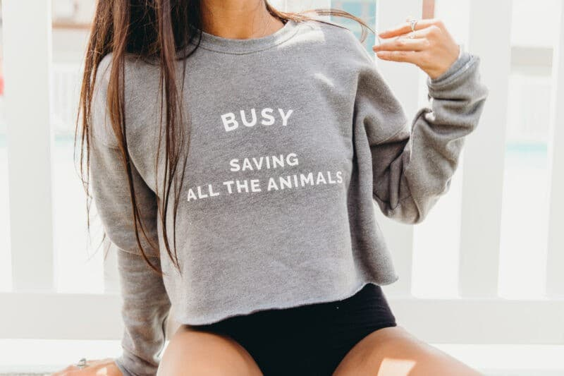 Is Wholesome Culture an Ethical Vegan Brand You Can Trust?