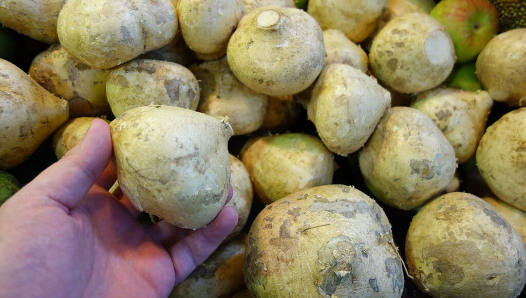 Where to Buy Jicama Online and In Grocery Stores