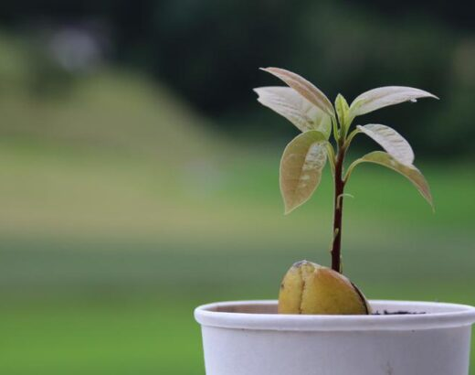 The 4 Best Planters For Avocado Trees in 2021