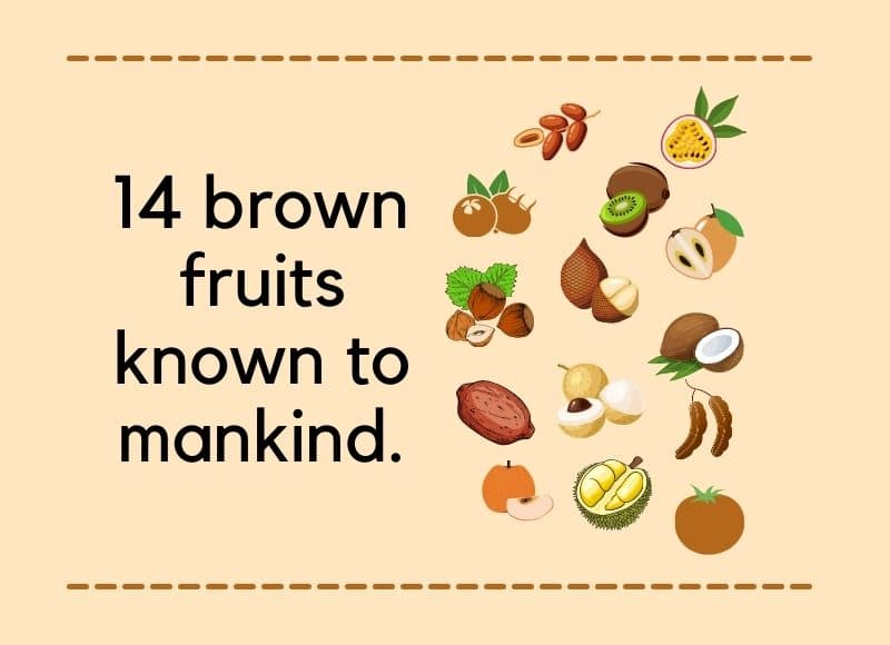 List of 14 Brown Fruits Known To Mankind (You Might Not Know A Few)