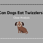 Can Dogs Eat Twizzlers? Here Is Everything You Need To Know