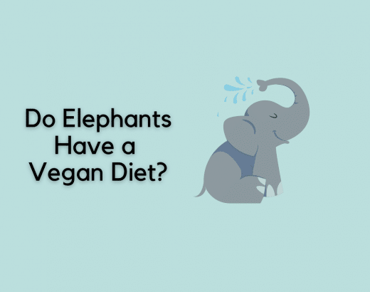 Do Elephants Have a Vegan Diet? Or Do They Sometimes Skip Plants?